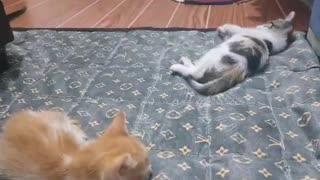 Our adorable pet kittens