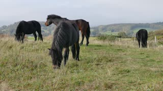 See how beautiful my beautiful horses are!