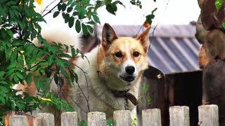 Understanding your Dog - Dog Training 101