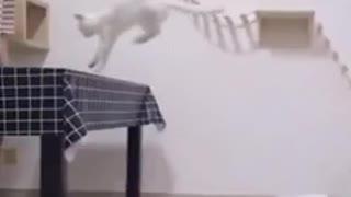 Cat jumping    Jumping cat tricks