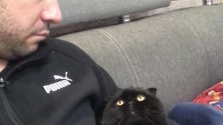 Clingy Kitty Wants a Hug
