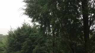 Powerful winds from Tropical Storm Henri Blowing Trees