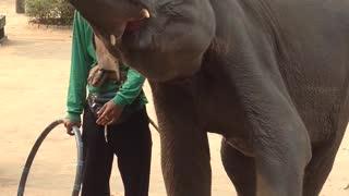 Elephant dance in Thailand