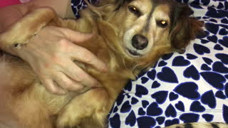Dog begs for cuddles in cutest possible way