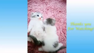 Cute Pets And Funny Animals Compilation 😻😻😻😻😻