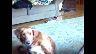 Funny dog talking about Corona Virus 2021