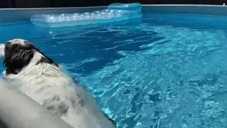 George the dog enjoying the pool in nice hot day