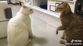 funny english speaking cat