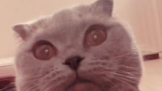 Scared grey cat films itself
