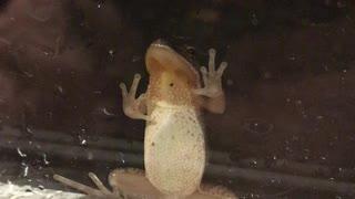 Cute little frog