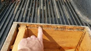 Do Honey Bee's really need more ventilation.