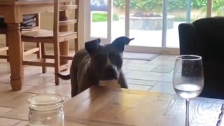Watch how this dog reacts when everybody starts whistling