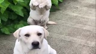 Funniest Animals /Cutest video Ever Best Of The 2021