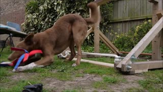 Best Trained and& Disciplined Dogs