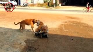 Watch this incredible animal scare video.