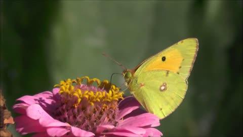 Butterfly flying on flower