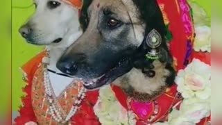 dogs marriage special video 2021,