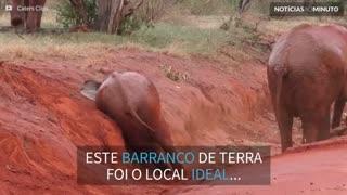 Elefante usa barranco para coçar o bumbum