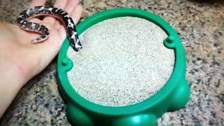A little snake plays in a new sandbox