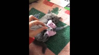 Funny cats/dogs
