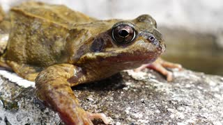 A close-up shot of a frog!