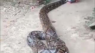 Playing with anaconda