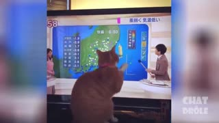 best funny cats 2021