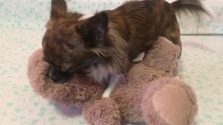 Playing with his teddy bear