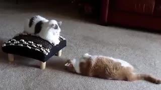 Let the cat games begin