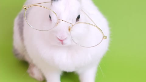 Funny rabbit, cute, professor rabbit