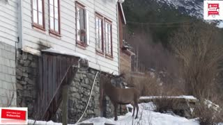 Stag visitsold woman's house every day for years