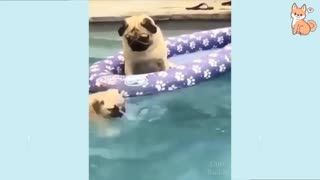Dog Puppy Doing Swimming Funny Video || Rumble || Short Video