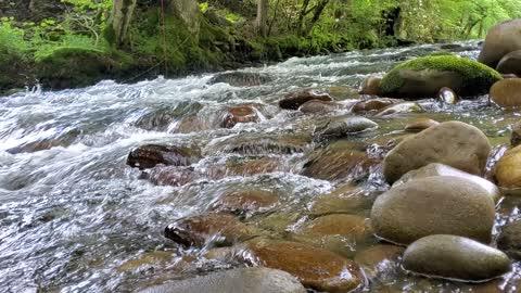Stoney Stream