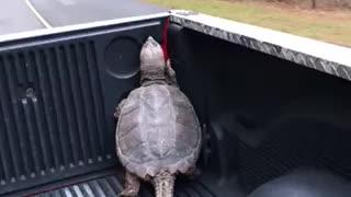 Ninja turtle found