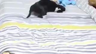 Funny dog video cute, dog video