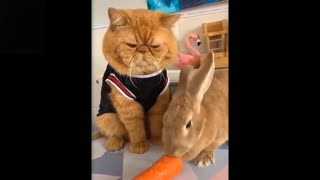 funny and exciting moments of pets and their owners