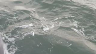 Fishermen Rescue Tangled Humpback Whale