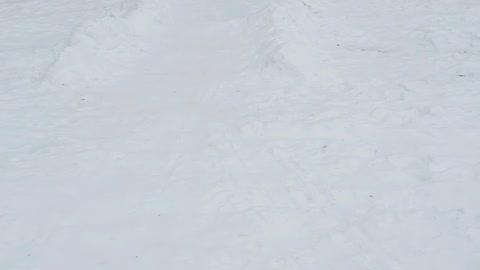 Boxer sledding