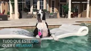 Cão desfruta de momento relaxante em piscina