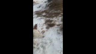 frozen animals in ice (P2)