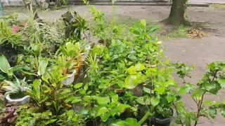 My beautiful plants