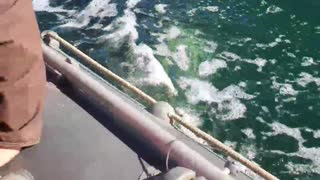Killer Whales Accompanying Fishing Boat After Work