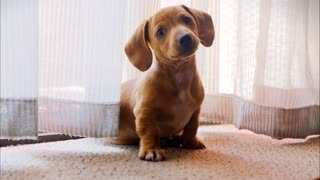 Look what a cute little dog people