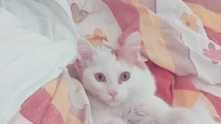 Lovely morning cat