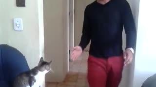 High Five Cute Kitty