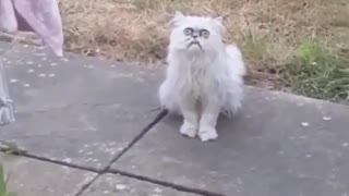 Scary weird looking cat
