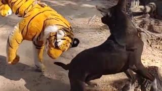 Funny video dog fake Tiger
