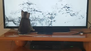 Kitten can't get enough of the Winter Olympics