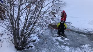 Firefighters heroically rescue deer from icy lake in Colorado