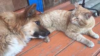 Two best friends 🐕🐈